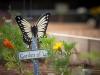 pop-garden-website-photos-_-jerry-mcclure-1809