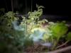 pop-garden-website-photos-_-jerry-mcclure-1819