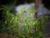 pop-garden-website-photos-_-jerry-mcclure-1834