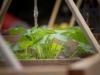 pop-garden-website-photos-_-jerry-mcclure-1835