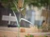 pop-garden-website-photos-_-jerry-mcclure-1848