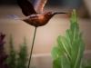 pop-garden-website-photos-_-jerry-mcclure-1860