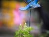 pop-garden-website-photos-_-jerry-mcclure-1861