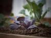 pop-garden-website-photos-_-jerry-mcclure-1866