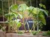 pop-garden-website-photos-_-jerry-mcclure-1867