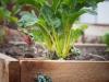 pop-garden-website-photos-_-jerry-mcclure-1869
