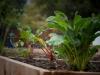 pop-garden-website-photos-_-jerry-mcclure-1872