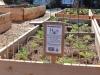 garden_food-002