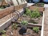 garden_food-021