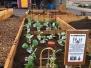 Imagine Garden