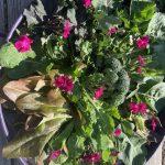 Salad - Wild Harvest Experience Market