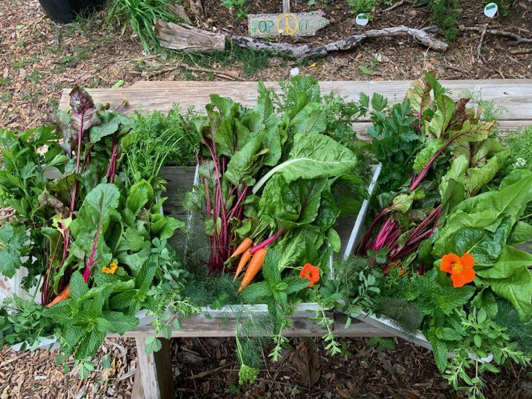 POP Harvest Box abundance IMG_8104