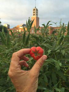 The Promise of Peace Imagine Garden, 2013 - 2016IMG_1264